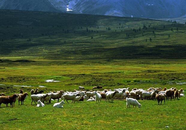 在乌鲁木齐南山哪里可以包车?