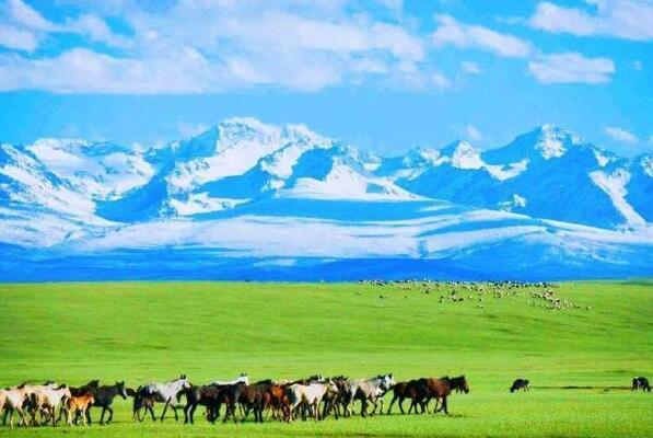 北疆旅游从乌鲁木齐租车多少钱
