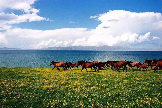 新疆旅游攻略,夏天来新疆,你会知道什么是美如画卷的天堂