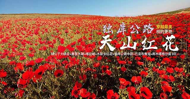 新疆自驾游攻略 穿越最美独库公路 相约美艳天山红花