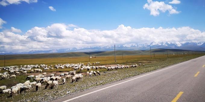 新疆独库公路8月自驾游记,独库公路自助游攻略
