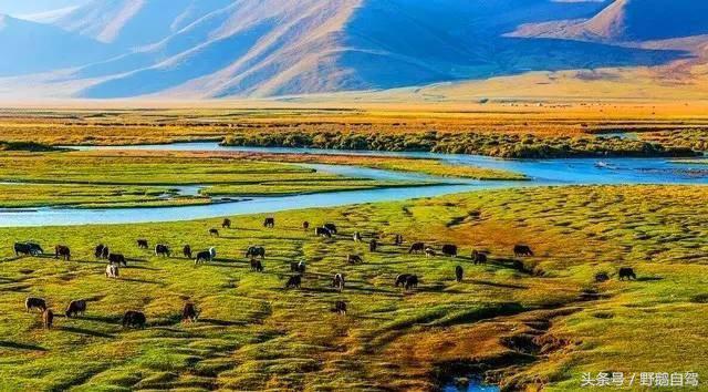 野鹅路线:自驾新疆游,推荐十条路线